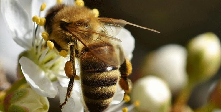 på naturens skuldre - bie